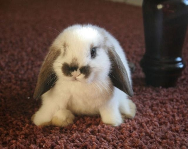 Your beauty product are now cruelty-free. Bunny approves